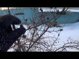 Black Metal Berries  Boroda Dead  Блэк Метал Ягоды