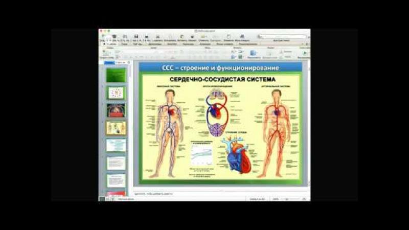 Кровеносная и кроветворная система организма Болезни, методики, лечение