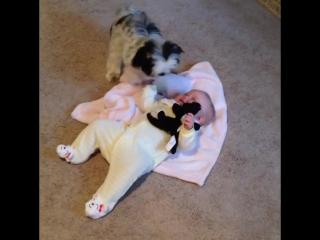 Щенки и малыши