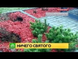 В России перед Новым годом украли ели, посаженные в пямять погибших в авиакатастрофе детей