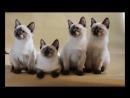кошки-мекошки продаются
