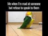 Когда я злюсь на кого-то, но отказываюсь говорить с ними