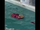 бассейн для собачек учат плавать