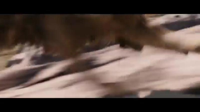 Хроники Нарнии Лев колдунья и волшебный шкаф 2005 Битва окончена 12 13 movie moment