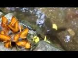Змееголов и бабочки...