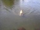 Сломал всю систему передвижения собак по воде