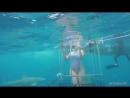 Во время съемок порно-фильма акула укусила актрису.