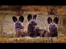 Борьба за выживание животного мира. Познавательный фильм.