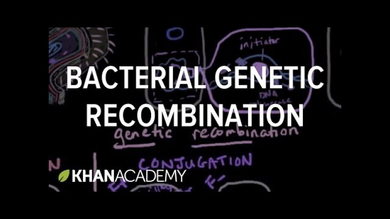 Bacterial genetic recombination | Cells | MCAT | Khan Academy