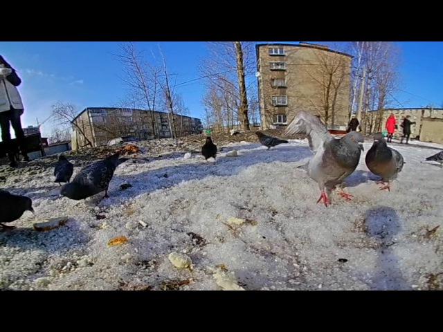 Тест камеры Amkov AMK 200S часть 2, кормежка голубей