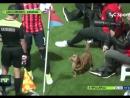 Собака на поле во время чемпионата Аргентины