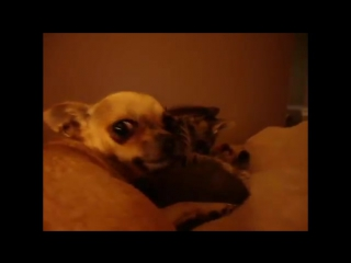 Dog Adopts and Protects Abandoned Kitten -- CUTE Cats and Dogs compilation- 2014-2015 [NEW]