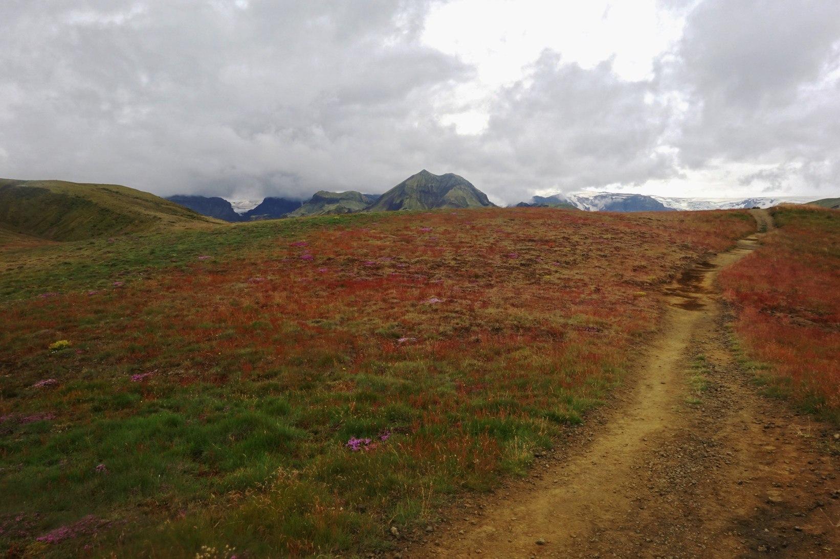 красные поля