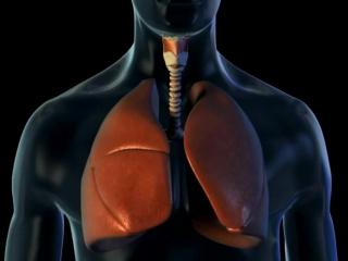 Аускультация лёгких_ нормальное везикулярное дыхание
