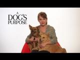 A Dogs Purpose Britt Robertson Shout