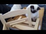 Животные тоже любят мебель из Икеа)