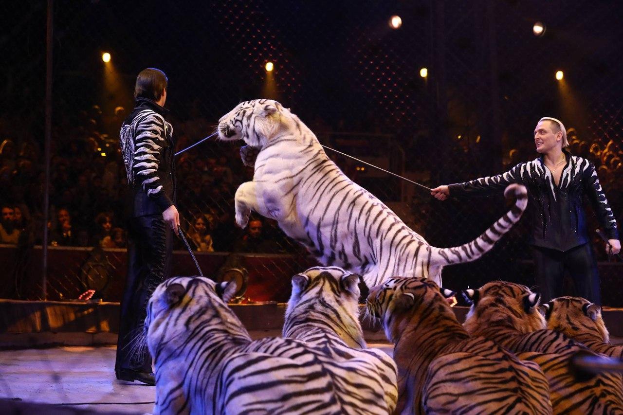 Русские артисты завоевали «цирковой Оскар» нафестивале вМонако