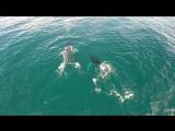 экскурсия наблюдение за горбатыми китами, залив Самана