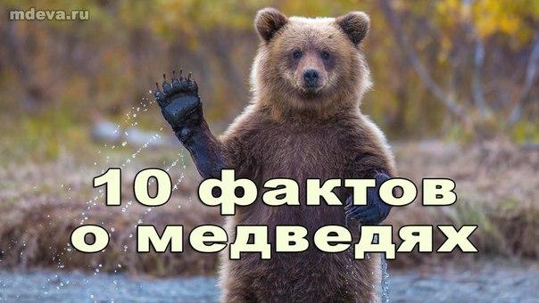 10 удивительных фактов о медведях!