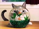 приколы с котами / коты и огурец /смешные коты /смешное про котов