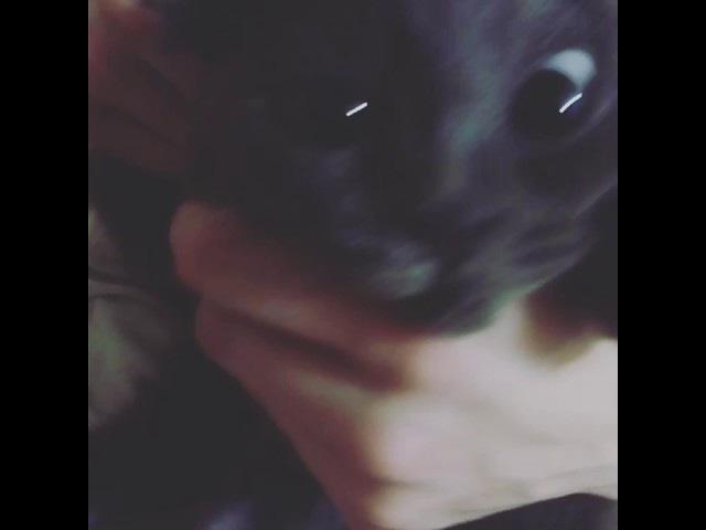 Голлум-кот прикол ржака
