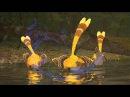 10 pianists in comparison - Rameau - Le Rappel des Oiseaux