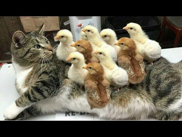 「かわいい猫」初めて他の子動物に会った猫の反応・新しい友達でき12390