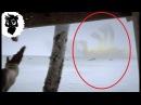 5 ГИГАНТСКИХ МОНСТРОВ СНЯТЫХ НА КАМЕРУ ч.2 Черный кот