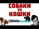 Собаки VS Кошки | СобакаПастернака 6