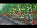 Грядки для помидоров идеи для дачи сада и огорода от дачников садоводов своими руками дачные идеи