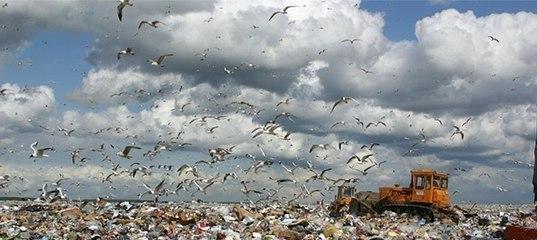принимают ли мусор новоселки