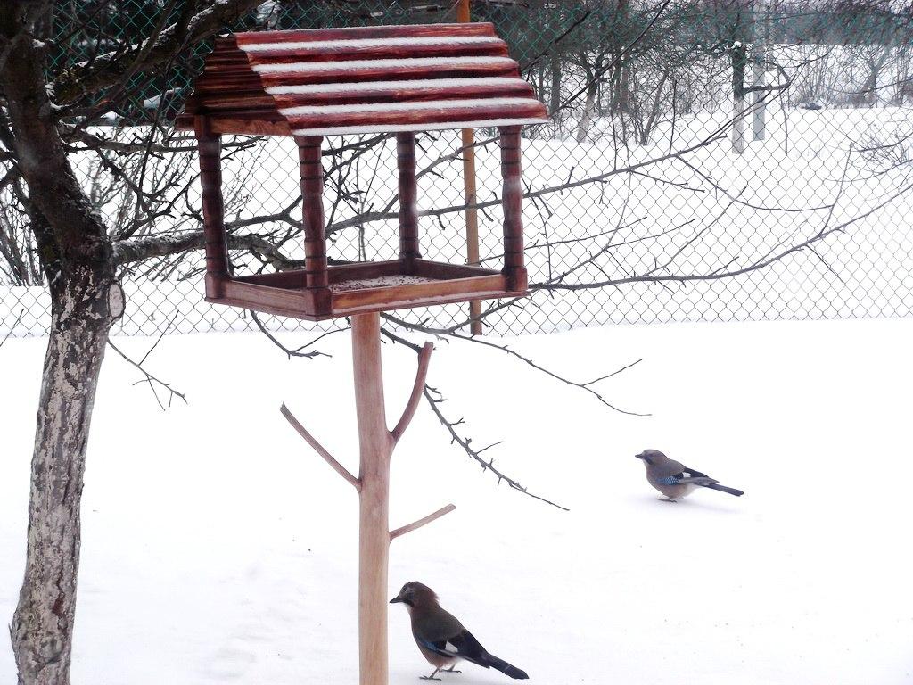 Автокормушка для кур: чтобы птицы были сыты