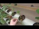 Клубника на гидропонике в теплице. Фермер Глеб