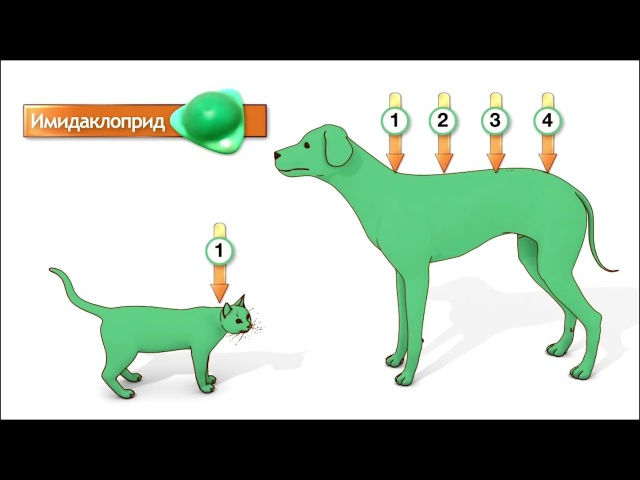 Кошкам и собакам от чесоточных клещей, блох и гельминтов