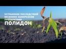 Устранение последствий весенних заморозков на кукурузе и подсолнечнике препар ...