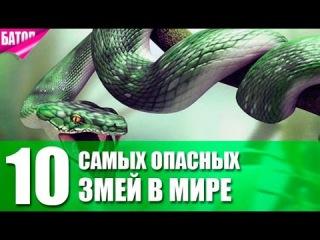 10 самых ОПАСНЫХ ЗМЕЙ в МИРЕ 10 most DANGEROUS SNAKES in the WORLD