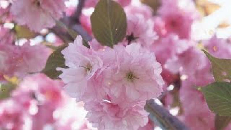 Счастливой и красивой весны всем друзьям!