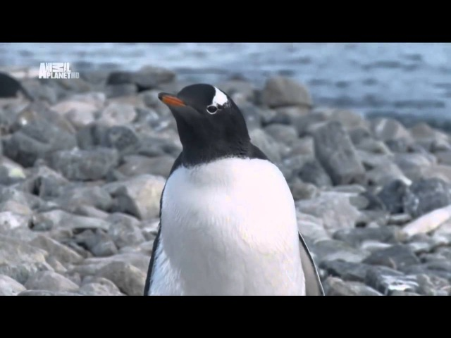 Чудеса голубой планеты - Антарктика xeltcf ujke,jq gkfytns - fynfhrnbrf