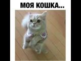 Моя кошка...