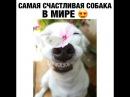 Самая счастливая собака в мире!