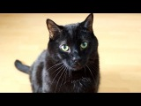 Preppy Walk (Official Music Video) N2 the Talking Cat