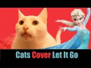 FROZEN - Let It Go - Cats Cover