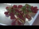 Làm thạch rau câu 3D hoa phượng đỏ và trang sách Quà tặng thầy cô ngày 20/11 ý nghĩa nhất