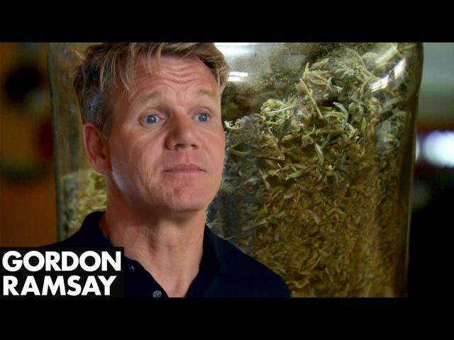 High As A Kite Owner Shows Gordon His Medicinal Marijuana   Hotel Hell