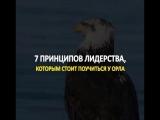 7 ПРИНЦИПОВ ЛИДЕРСТВА которым стоит поучиться у орла