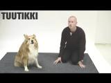 Как собаки реагируют на правильный лай