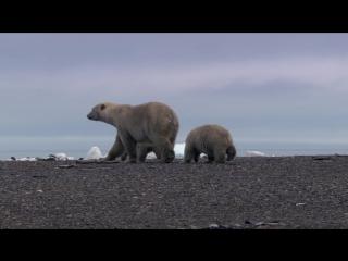 BBC: Жизнь / BBC: Life (2009) BDRip 720p - (3 серия - Млекопитающие)