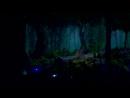 Волшебный звериный лес