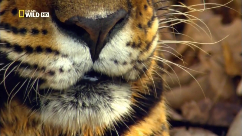 Дикая Амазонка. Колыбель жизни