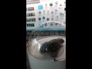 Тюлень Паро